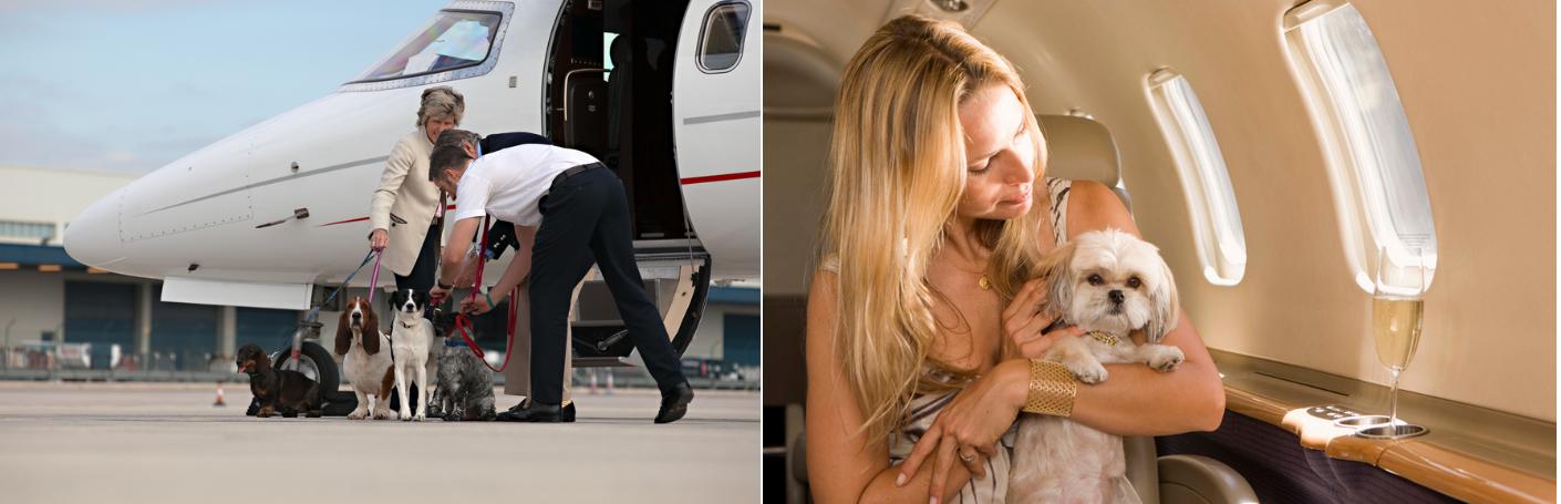 перелет частным самолетом с домашними животными